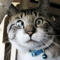 Zatrudnił Chińczyków, żeby oglądać koty w pracy! - programista informatyk verizon outsorcing przekręt chińczycy praca śmieszne koty w internecie