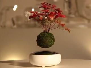 Japończycy Wymyślili Latające Drzewka Wideo Latające