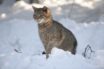 11ac1bec435a55 Chyba więc jesteśmy kotom coś winni, prawda? A naprawdę niewiele trzeba, by  im pomóc. Wystarczy ciepłe schronienie i trochę jedzenia. Schronienie na  zimę