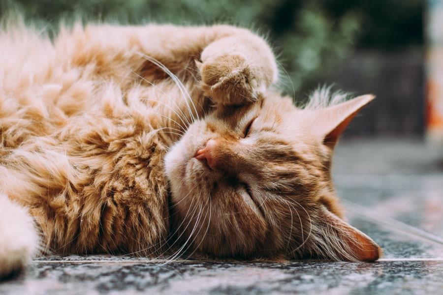 śpiący kot - jak karmić kota