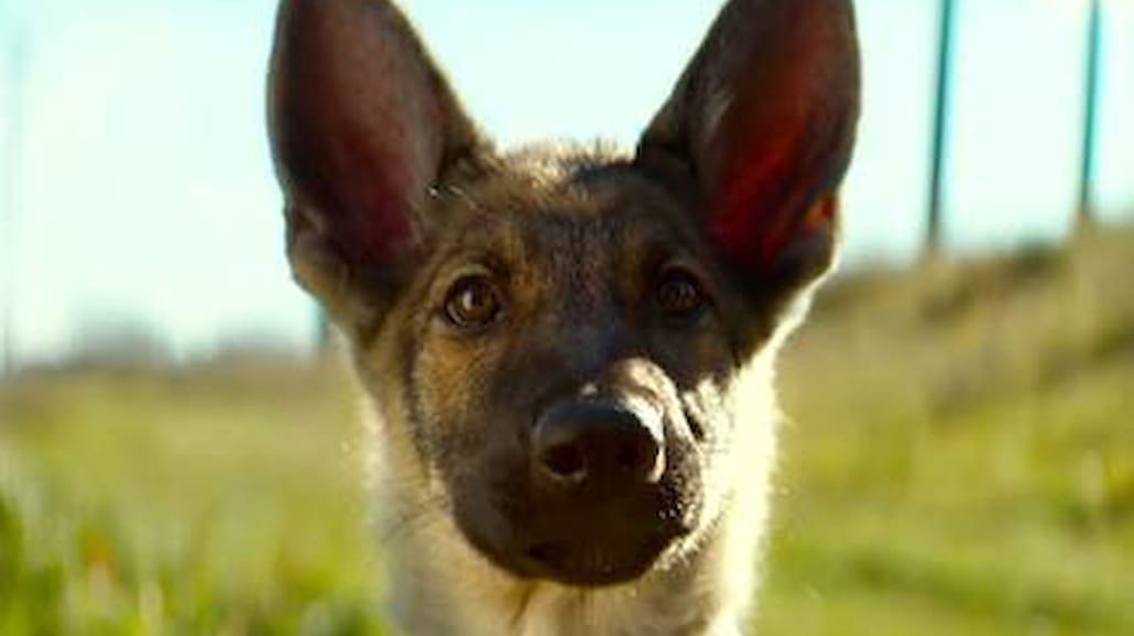 Psy na posterunku! W filmach było ich sporo. Znasz wszystkie?