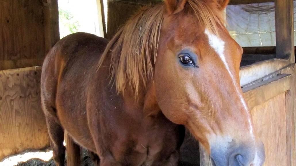 Koń w stajni