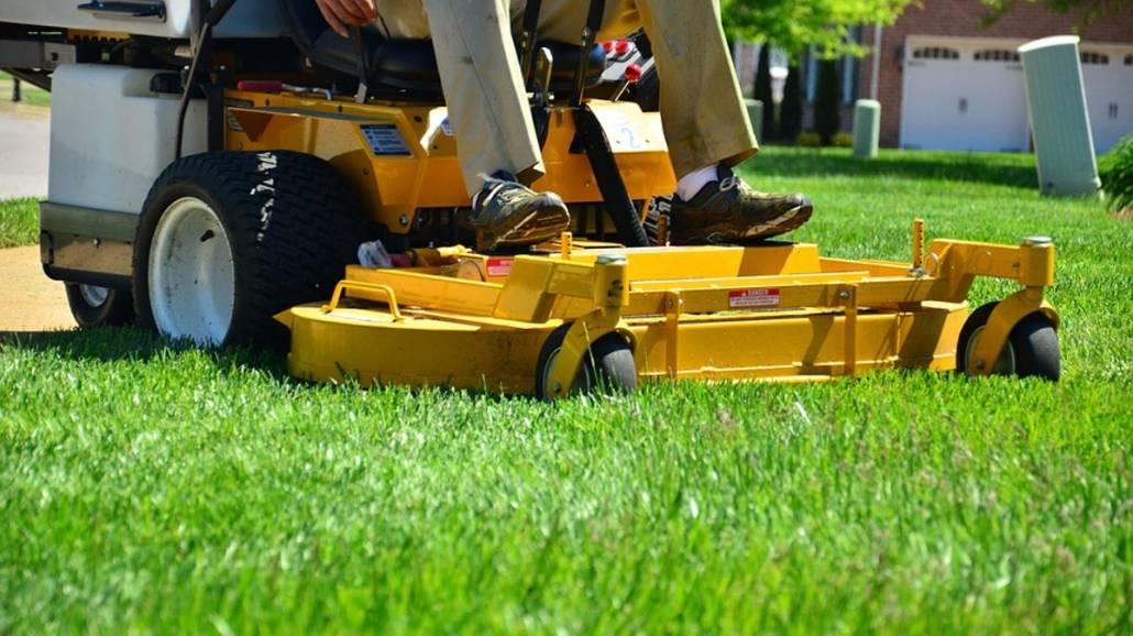 Jak usunąć plamę z trawy?