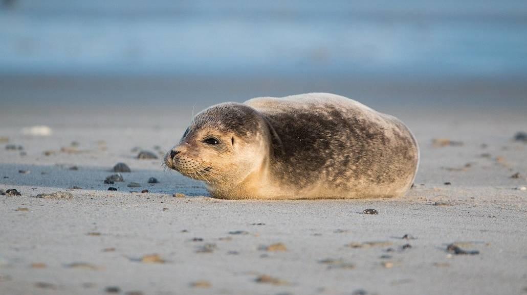 Broń chemiczna na dnie Bałtyku - zagrożenie katastrofą ekologiczną bliższe niż się wydaje?