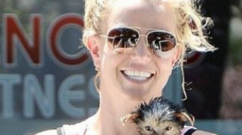 Britney Spears wydaje fortunę na swoje psy