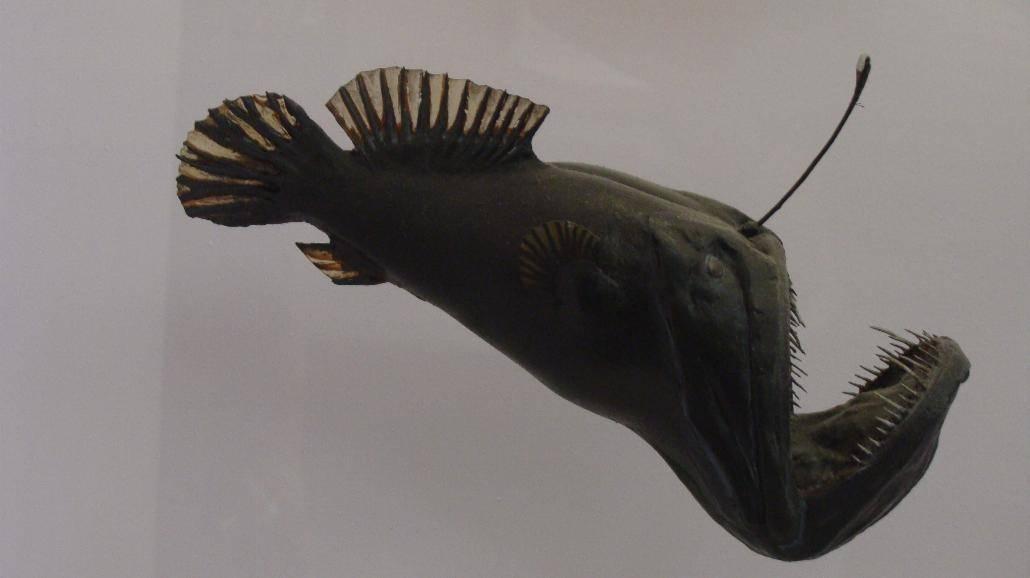 Morski stwór sfilmowany przez amerykańskich naukowców [WIDEO]