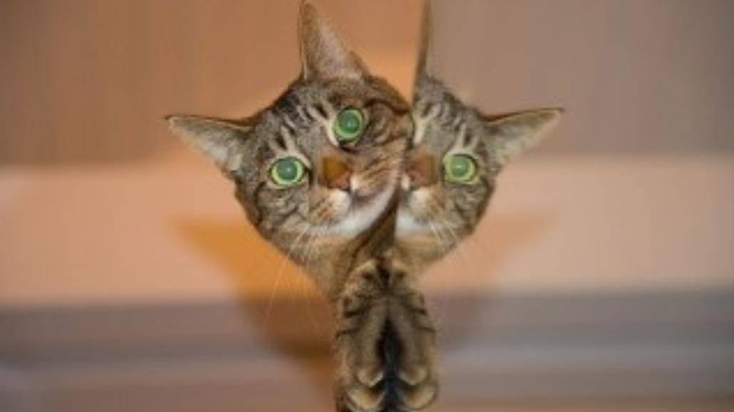 Dlaczego koty boją się ogórków? [WIDEO]