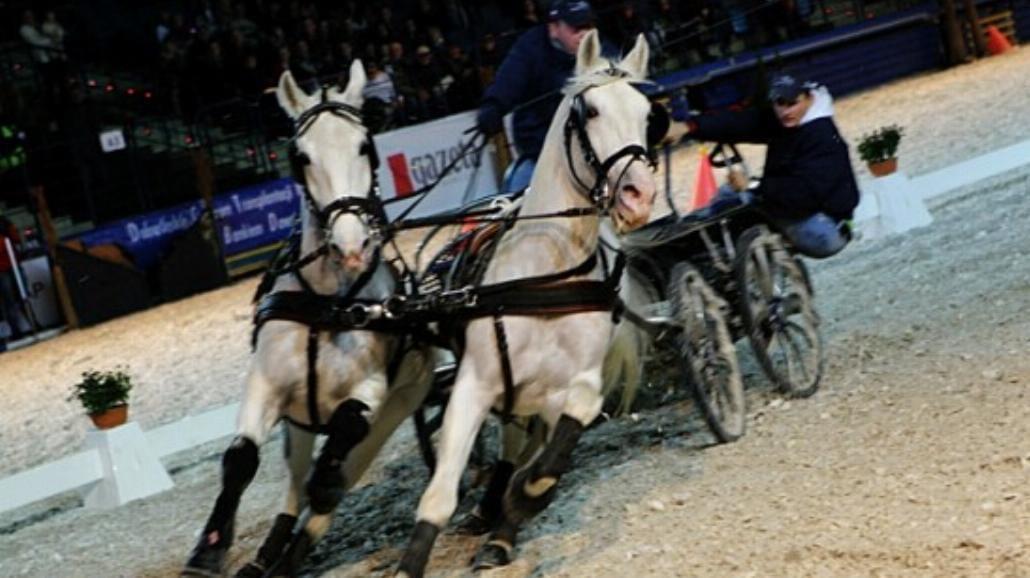 Sukces Parady jeździeckiej w Hali Stulecia