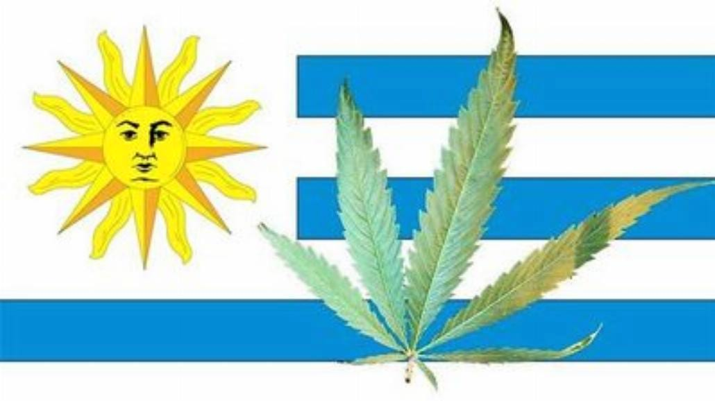 Marihuana legalna w Urugwaju
