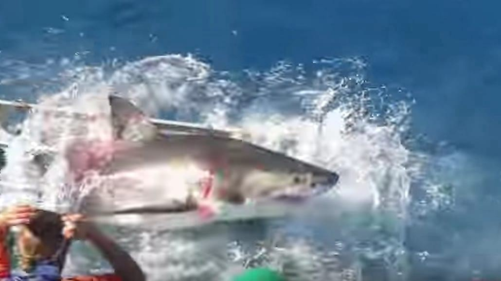 Przerażający atak rekina! Amatorskie nagranie obejrzały już miliony na całym świecie [WIDEO]