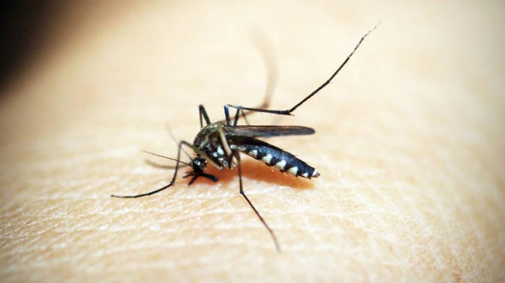 SposÃłb na komary