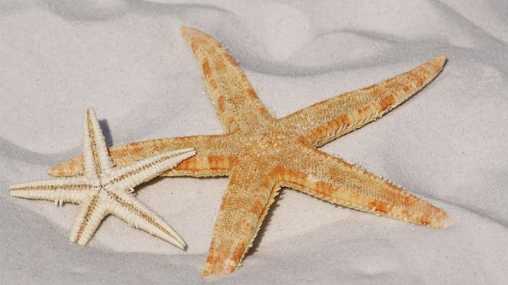 Polskie morze droższe od wczasów za granicą?[WIDEO]
