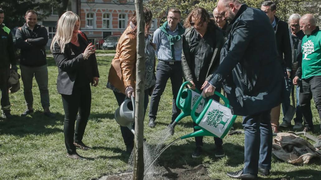 Drzewo dla Adamowicza we Wrocławiu