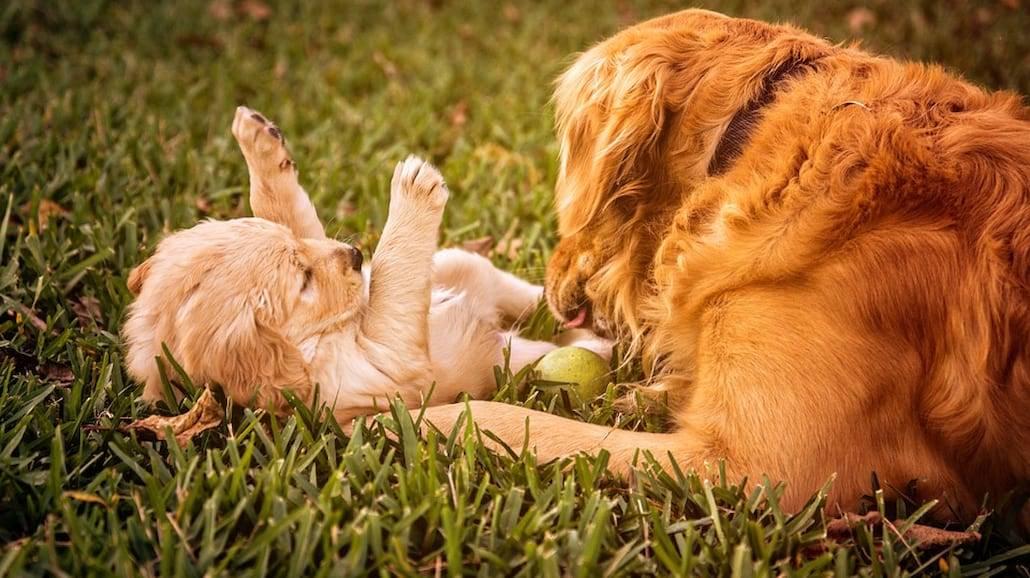 Te rasy psów są najinteligentniejsze!