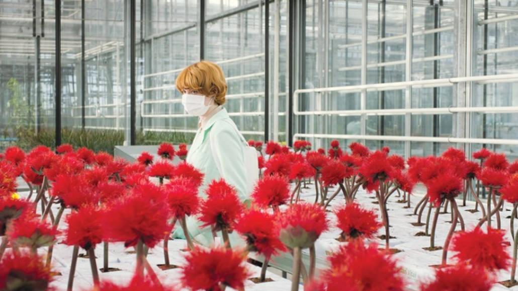 Kwiat szczęścia - film 2020