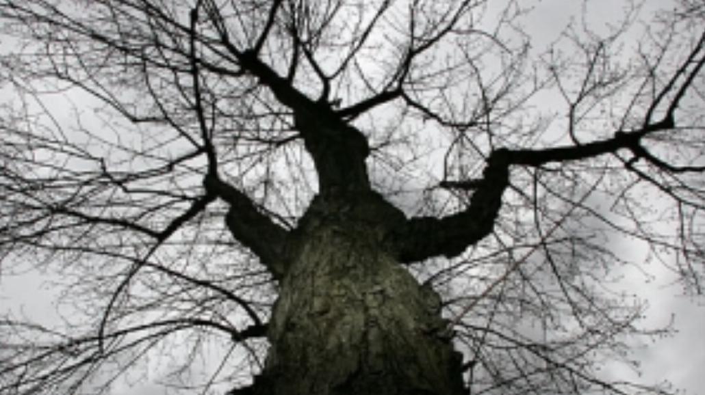 """Wystawa """"Drzewa"""""""