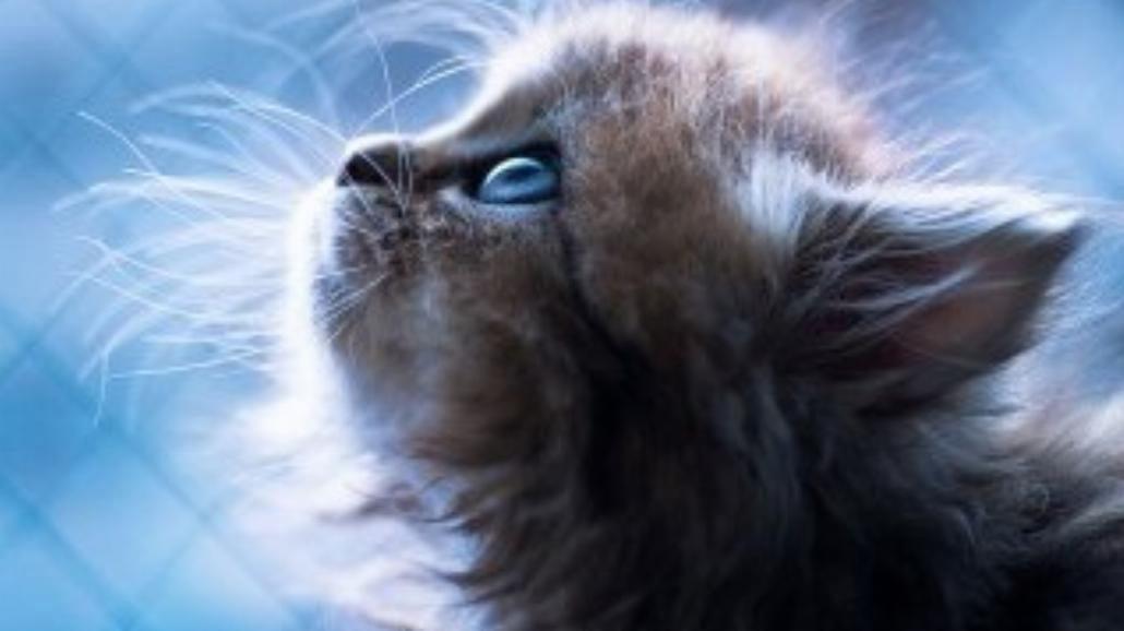 Najsłodszy kociak na świecie? Zobacz zdjęcia!