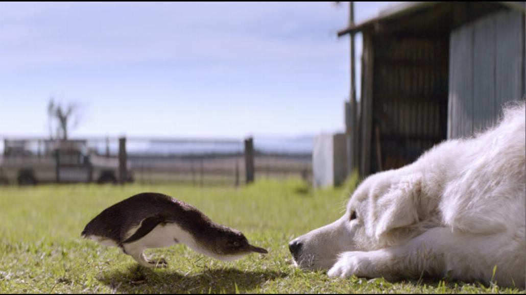 Prawdziwa historia niezwykłej przyjaźni psa i pingwinów