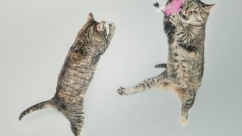 Oglądanie filmików z kotami pomaga w pracy!