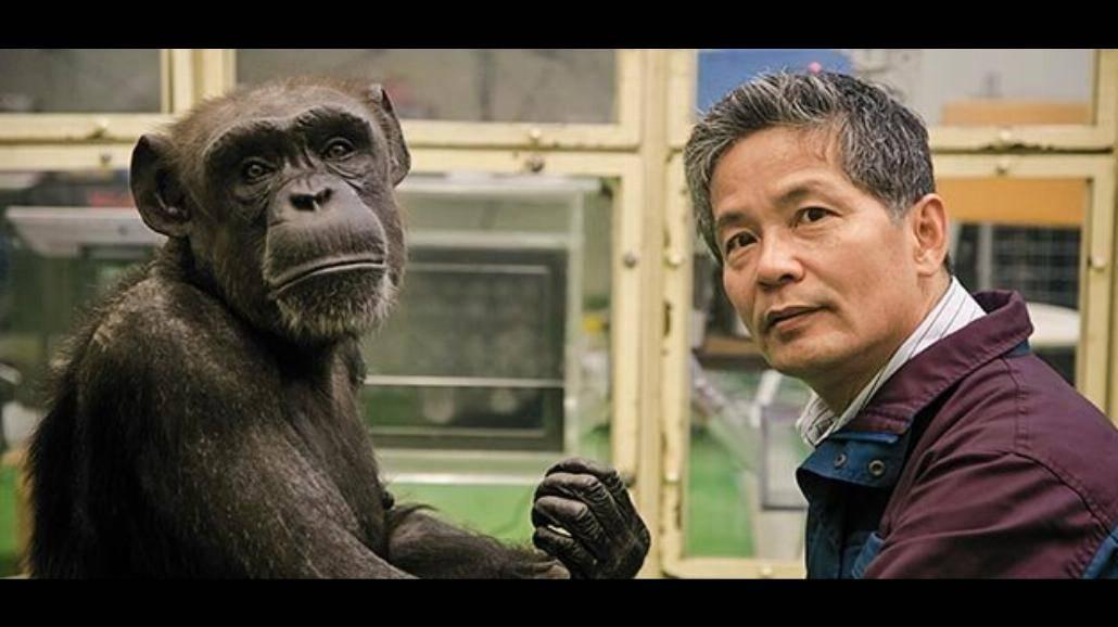 Matsuzawa: Szympansy przewyższają studentów w niektórych testach