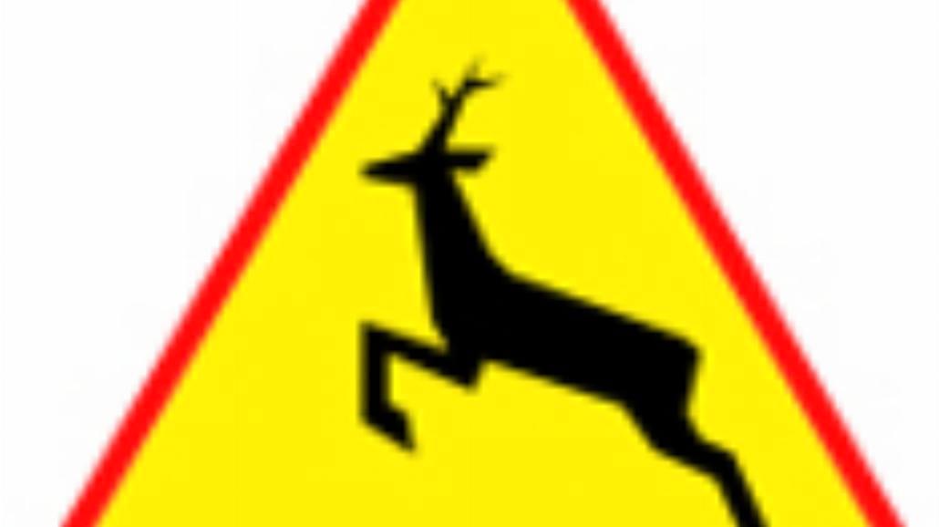 """A-18b """"zwierzęta dzikie"""""""