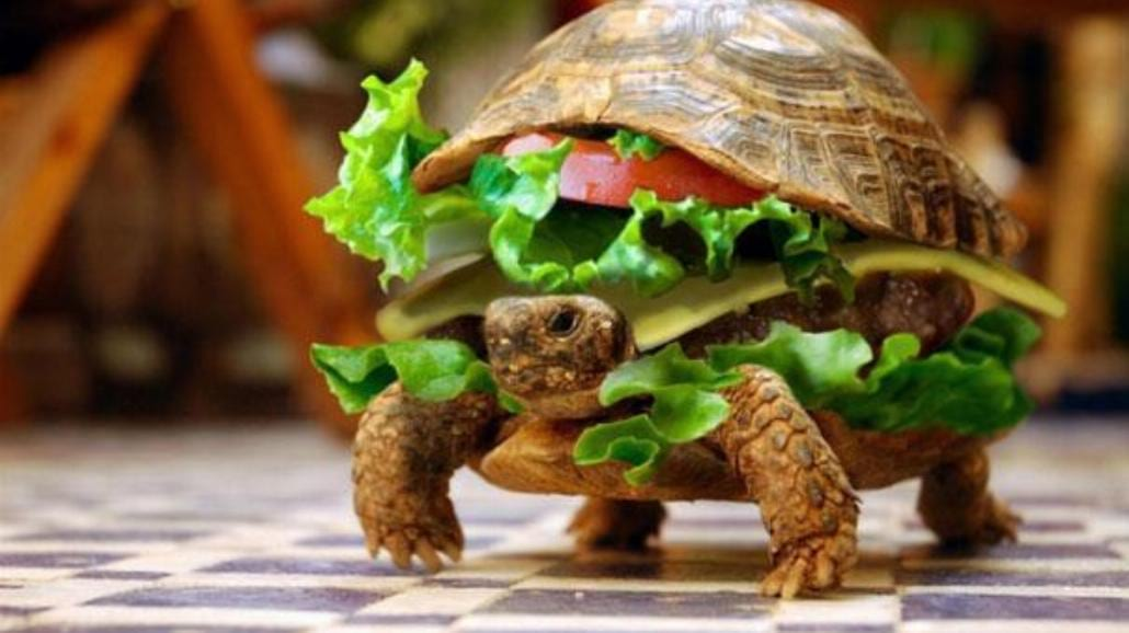 Próbował przemycić żółwia przebranego za burgera