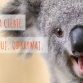 Australia dla Ciebie - sprawdź możliwości wyjazdu - praca za granicą, oferty pracy, kwalifikacje, doświadczenie zawodowe