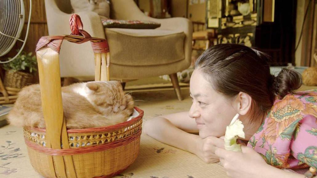 Kot do wynajÄ™cia - filmy z kotami