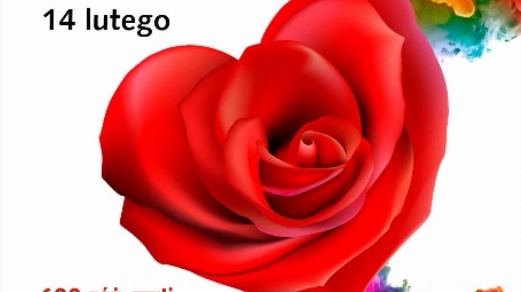 Walentynkowy bukiet z 600 róż