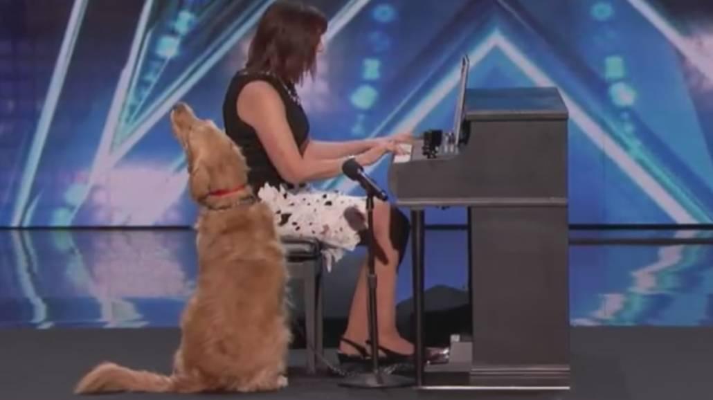 Ten pies naprawdÄ™ potrafi Å›piewać! Golden podbiÅ' serca jurorÃłw Got Talent [WIDEO]